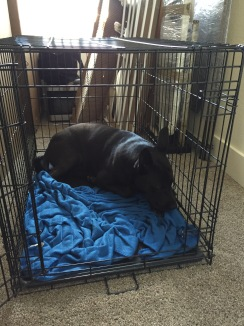 8/26/17- Pulled out his kennel and he climbed right in. I think he missed his den