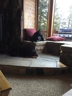 9/17/17 - Loki sitting in the window seat