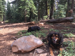 9/16/17 - Loki and pal Rielly taking a break on a 10 mile hike