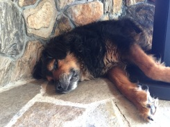 9/17/17 - Old pal Rielly still tired from the hike yesterday